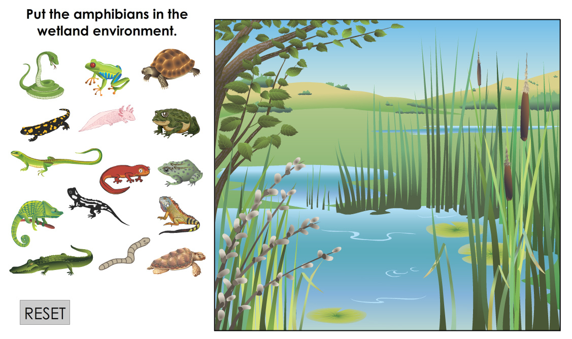 Put The Amphibians in the Wetlands