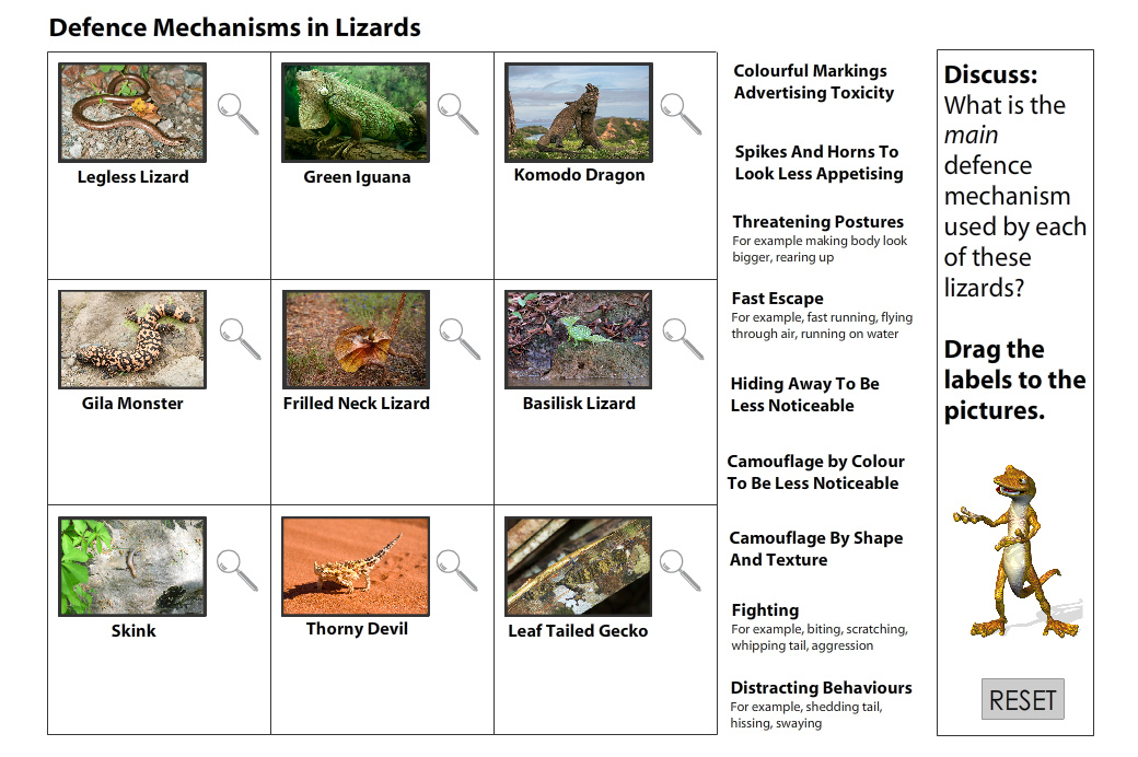 Lizard Defence Mechanisms